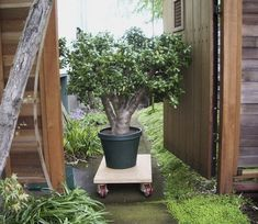 You may want something less costly because they are for Less maintenance plants