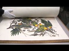 The Birds of America.  Audubon first edition sells for nearly 8M$ at auction! (Fever Dream)