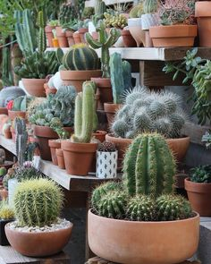 Cactus Shop #cactus #cactuslover #cactuslove# #cacti #kaktus #kaktüs #cat#garden #gardenia #flowers #flower #cactusmania #cactusmagazine #cachorroétudodebom#cactusclub #objektifimden #niğde #istanbul #türkiye #eu #euphoria #euphorbia