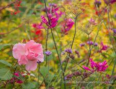 Entry at the Gardens, Plants, Color, Design, Outdoor Gardens, Colour, Plant, Garden