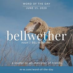 'Bellwether' is the #wordoftheday . #language #merriamwebster #languagelearning #dictionary Vocabulary Building, Vocabulary Words, Weird Words, Some Words, Merriam Webster, Writers Write, Words Worth, Phobias, Word Of The Day