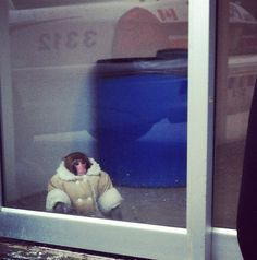 The Best Ikea Monkey Memes (Plus Video! Animal Memes, Funny Animals, Cute Animals, Baby Animals, Animal Captions, Barbie, Monkey Memes, Canadian Things, Ikea
