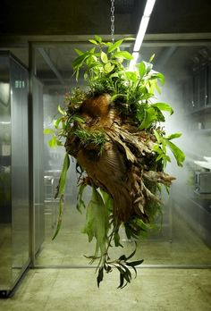 Botanical Sculpture #4 dwell. Unusual. forest troll maybe? shapeshifter. something out of the red woods