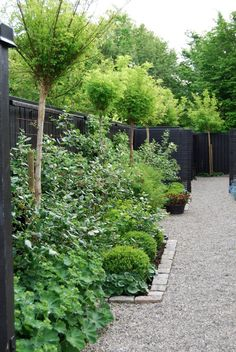 trend alert: black fences | gardenista- tall trees but no shading to go behind garden beds along side fence