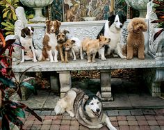 Dog Days - With benchwarmers like this, who needs to sit? In this story: Hair: James Pecis; Makeup: Aaron de Mey Produced by Dawn Boller for Little Bear; Mama Africa, Mans Best Friend, Best Friends, Farm Animals, Cute Animals, Dog Crate, Dog Photography, Dog Houses, Dog Walking