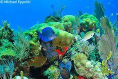 Belize-diving_aquarium.jpg (500×335)