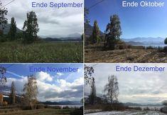 Wie sieht es im Ried im September, Oktober, November und Dezember aus? #edgarten #gartenblog #12telBlick Collagen, Photos, Sunrise, December