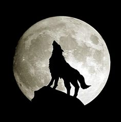wolf moon - Google Search