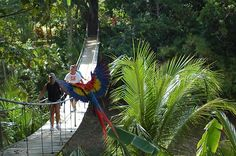Roatan, Honduras to hold a monkey and see parrots and iguanas