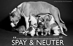 Spay & Neuter your pets. No more unwanted puppies. Adopt from a shelter or rescue... Until they all have a home.