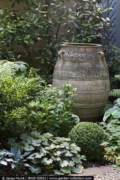 shade garden with a large ceramic urn surrounded by Sarcocca confusa, Hosta, and Geraniums
