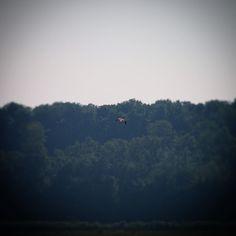 Rovfugl på udkig på Helnæs Made #visitfyn #fyn #nature #bird #visitdenmark #naturelovers #nofilter #natur #denmark #danmark #dänemark #landscape #nofilter #assens #mitassens #vildmedfyn #fynerfin #vielskernaturen #visitassens #instapic #picoftheday #sommer #september #beautiful