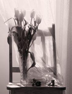 by Eva Daniloff