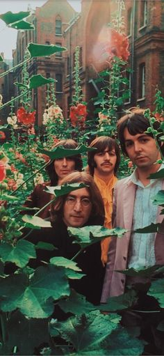 meet my melancholy blues — the beatles in the garden, 1968 Beatles Love, Les Beatles, Beatles Poster, Beatles Guitar, Beatles Photos, Photo Wall Collage, Picture Wall, Estilo Hippie, Music Aesthetic