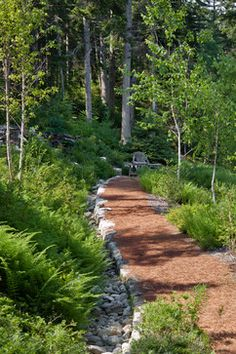 Elegant walkway surrounded on each size by ferns and young trees leading to a private bench.