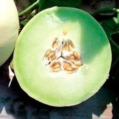 """50 Seeds, Melon """"Green Honeydew"""" (Cucumis melo) Seeds By Seed Needs by Seed Needs: Vegetables. $1.85. Ready for harvest in about 100 to 125 days. Prefers an area of full sunlight. Best if grown in a larger area as these plants vine outwards. Easy planting instructions along with a colorful picture printed on each """"Seed Needs"""" packet!. Quality Melon seeds packaged by """"Seed Needs"""". The Honeydew Green Melon is the classic green honeydew - sweet and delicious. Excellent by itself..."""
