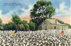 Cabin in the Cotton Little Rock Arkansas AR Vintage 1948 Linen Postcard Pine Bluff Arkansas, Cotton Painting, Little Rock Arkansas, Cotton Fields, Country Barns, Vintage Postcards, Landscape Art, Vintage Art, Illustration Art