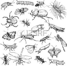 drawing: set of line drawing insects, hand drawn vector illustration
