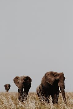 Must love Africa - Animals Wild Life Animals And Pets, Baby Animals, Cute Animals, Baby Hippo, Wild Animals, Amazing Animals, Animals Beautiful, Wildlife Photography, Animal Photography