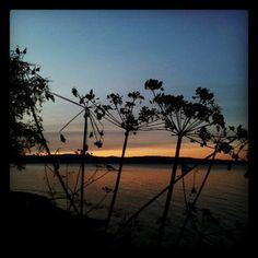 Instagram User: mymagicalmoments  #trondheimsfjorden #lade #instanaturelover #evening #visitnorway #natureonly #nature #ringvebukta #instagood #visittrondheim #fjord #sea #naturelovers #trondheim #sunset #ladestien