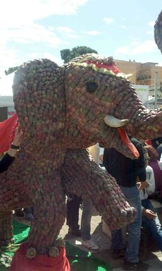 The Winner is...the Elephant