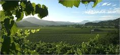 Google Image Result for http://www.californiawinepress.com/wp-content/uploads/2011/02/Sonoma-Wineries.jpg
