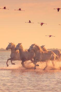 Most Beautiful Animals, Beautiful Horses, Beautiful Creatures, Four Horses, Wild Horses, Cute Horses, Pretty Horses, Horse Photos, Horse Pictures