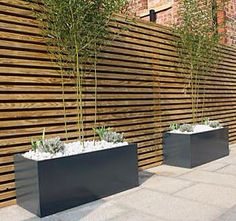Great use of bamboo in containers for privacy screening