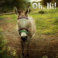 Donkey says Hi