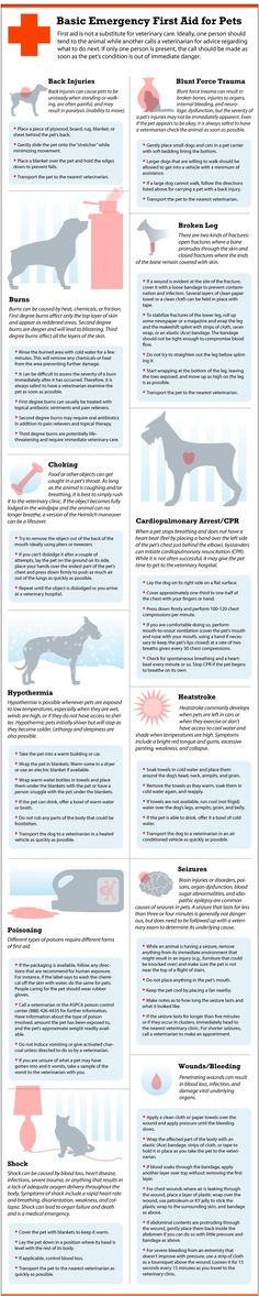 Basic-emergency-first-aid-for-pets
