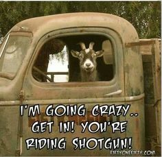 You're riding Shotgun