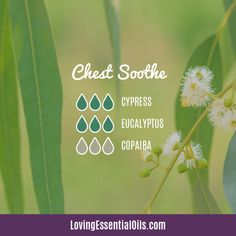 10 Copaiba Diffuser Blends - Soothes Anxiety & Uplift Mood by Loving Essential Oils   Chest Soothe with cypress, eucalyptus, and copaiba essential oil. Visit blog post for FREE printable cheat sheet off all diffuser blends. #lovingessentialoils #diffuserblends #copaibaessentialoil