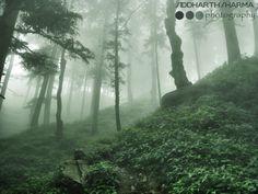 forest by Siddharth Sharma on 500px