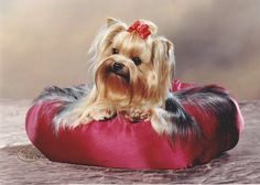 This burgandy fleece bed is warm and cozy for a cold winter night. Beds are made in fleece with plush polyester filling. All beds are machine washable on gentle cycle and air drying is recommened. My beds are zipper free for the safety of your pets.