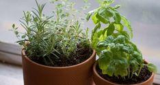 10 Tips For Starting Vegetable Seeds Indoors - Garden By Yourself Starting Vegetable Seeds, Starting Seeds Indoors, Seed Starting, Container Herb Garden, Garden Pots, Vegetable Garden, Landscaping Tools, Backyard Landscaping, Backyard Ideas