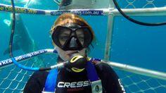Great White Shark Cage Dive / Calypso Star Port Lincoln. Australia - Lo On The Go