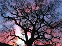 """This shot was taken in a backyard in Bear Valley Springs. The shooter says his 300-year-old oak tree """"creates a fantastic subject to an awesome sunset."""" (Photo courtesy of Fred Nilson)"""