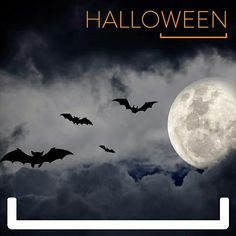 Have a black dress, hot glue and a couple minutes? Then you've got yourself a super cute bat costume Diy Bat Costume, Bat Halloween Costume, Halloween Costumes You Can Make, Halloween Bats, Halloween Movies, Spirit Halloween, Costume Ideas, Halloween 2017, Halloween Scene