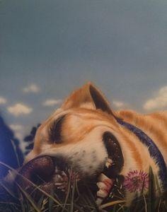 Dog art, dog painting, sleeping dog, dog artwork on canvas
