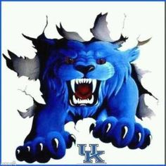 Kentucky Wildcat !