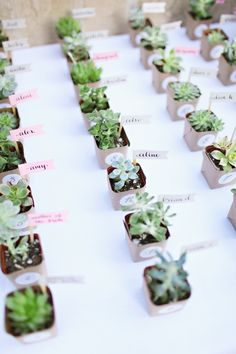 Succulent Escort Cards- the idea is for our guests to get their plant and to take it to their table. We are wanting them to put it in the centre for It to be part of the centerpieces, almost as if the table was waiting on their arrival to make the decor complete. At the end of the night they can take their plant home.