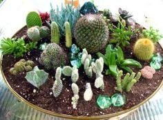 indoor cactus garden cacti garden indoor gardening cactus images mini cactus find image houseplants delicious garden ideas