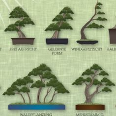bonsai grundformen