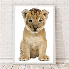 Malaga, Lew, Cats, Animals, Teaching, Gatos, Animales, Animaux, Animal