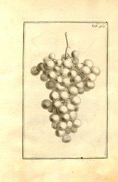 (1700) - Josephi Pitton Tournefort ... Institutiones rei herbaria.