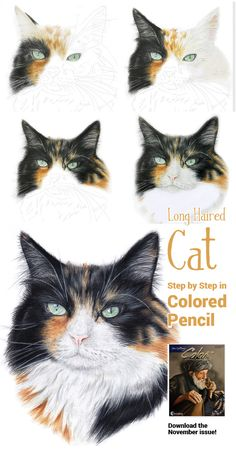 November's Colored Pencil Step by Step: Molly, a long haired cat in 8 easy step by Tracey Pinnington. Drawing Hair, Cat Drawing, Animal Drawings, Pencil Drawings, Pencil Sketching, How To Draw Fur, November Colors, Pencil Drawing Tutorials, Drawing Ideas