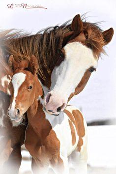 A beautiful portrait of a mare & foal.