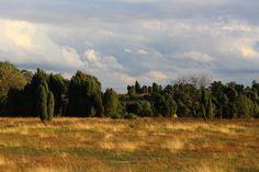 Naturschutzgebiet - Lüneburger Heide