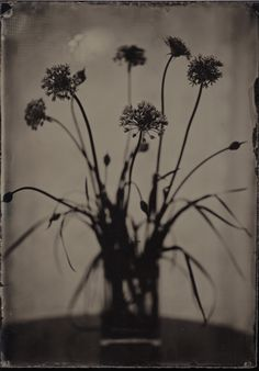 5x7 Wet Plate Collodion Ambrotype on Clear Glass by Angie Pember Brockey