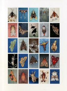 Mariposas Nocturnas, Index No. 5, La Fortuna, Provincia de Chiriqui, Panama, August 2005 | Emmet Gowin